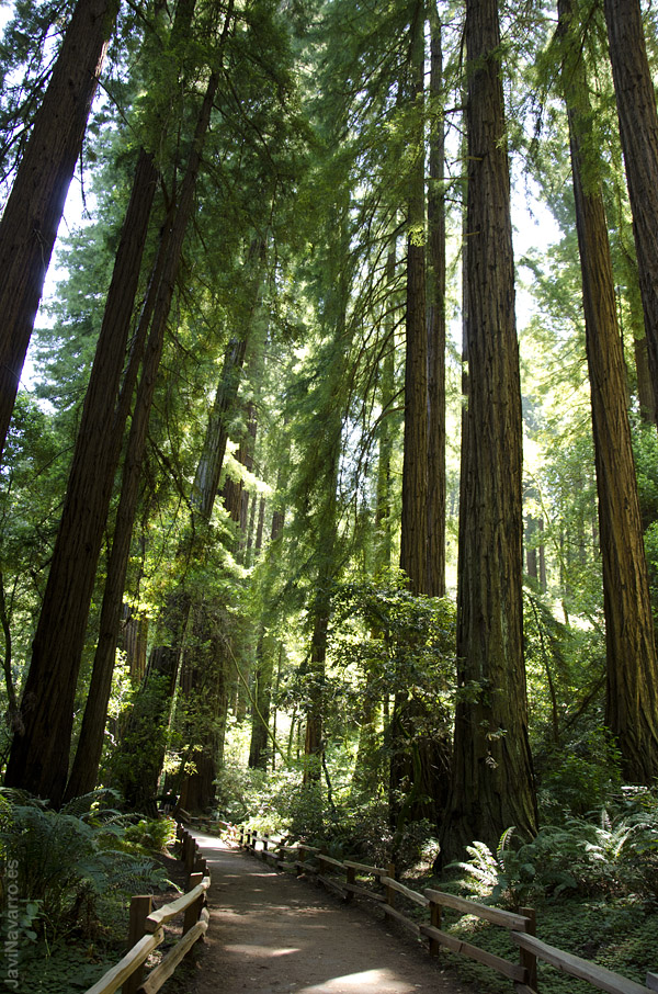 Muir Woods || Nikon D7000 | 1/100s | f/5 | ISO 800 | a pulso